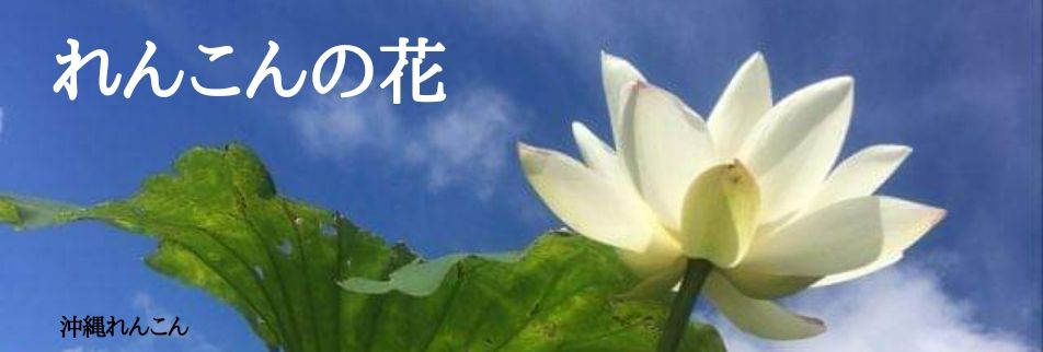 沖縄健康/自然栽培/こだわり野菜/収穫体験も出来る沖縄れんこん
